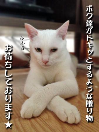 しらこ2013.7.6