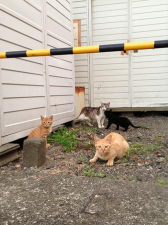 駅猫2013.7.10⑥
