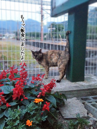 駅猫2013.7.12①