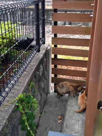 駅猫2013.7.14①