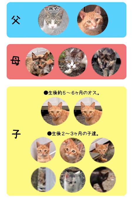 駅猫の図2013.7.14