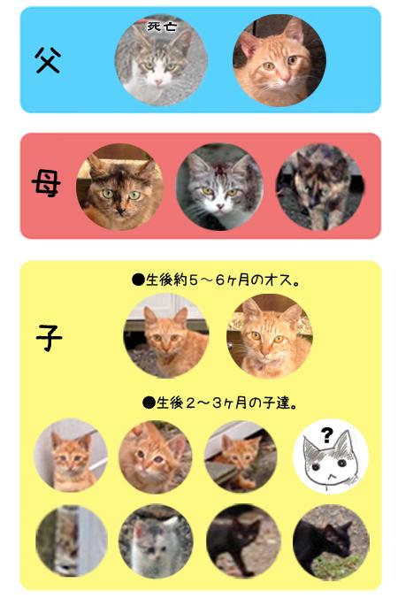 駅猫の図2013.7.15-2