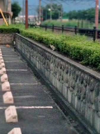 駅猫2013.7.17②