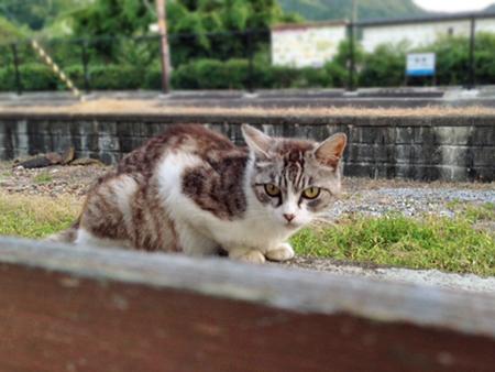駅猫2013.7.19②