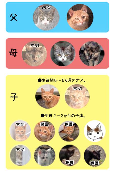 駅猫の図2013.7.27