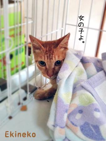 駅猫2013.8.1①