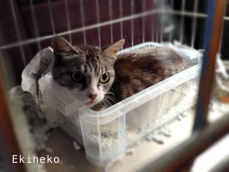 駅猫2013.8.4
