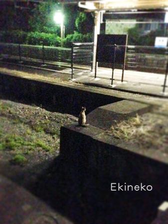 駅猫2013.8.13