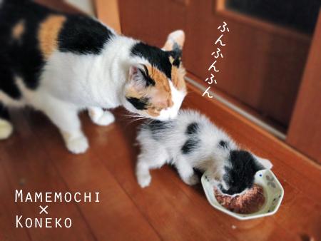 まめこねこ2013.8.15
