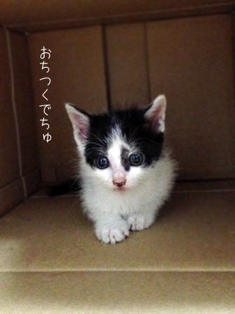 ごまもち2013.8.17②