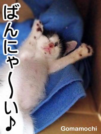 ごまもち2013.8.18②