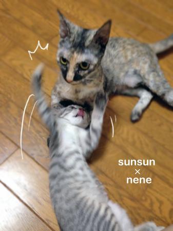 スンスン&ねね2013.8.19