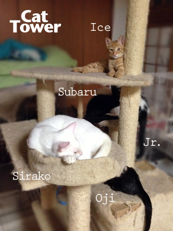 猫タワー2013.8.24