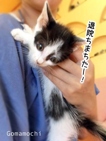 ごまもち2013.9.2