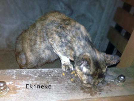駅猫2013.9.6