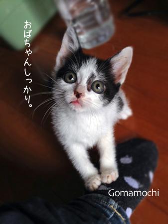 ごまもち2013.9.17