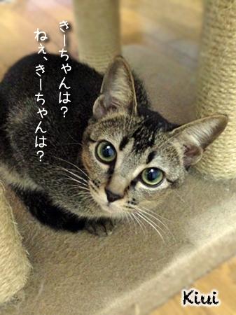 きーちゃん2013.10.5