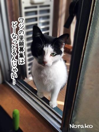 のらこ2013.10.12②