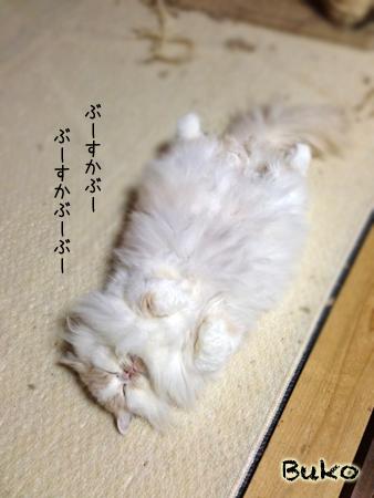 ぶーこ2013.10.29①