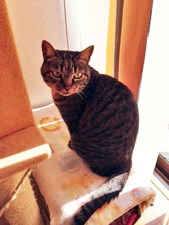 先住猫さん2013.11.4