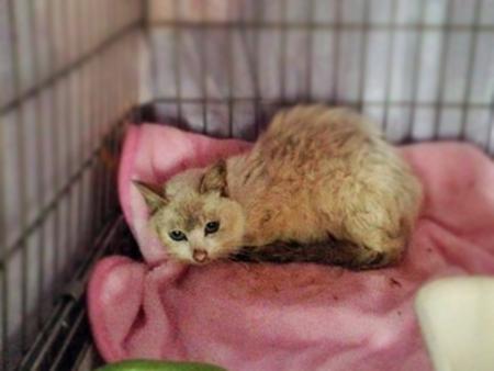 保護猫2013.11.6