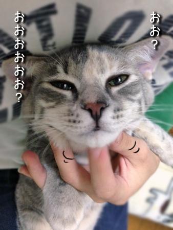 ねね2013.11.7②