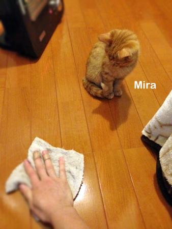 ミラ2013.11.15