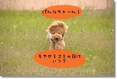 DSC_9529.jpg