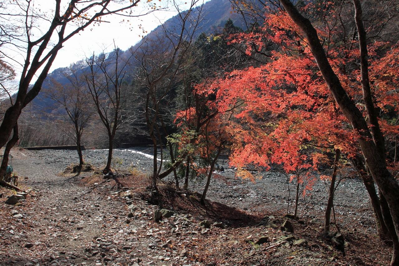 蛭ヶ岳_071