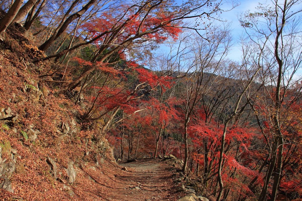 蛭ヶ岳_072