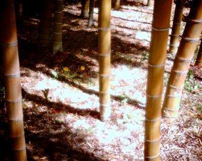 竹林にタンポポ:Entry