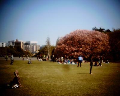 プラタナス並木とサクラと東京タワー:Entry