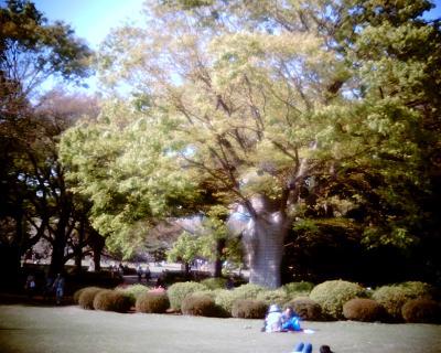 ケヤキの木・新宿御苑:R2