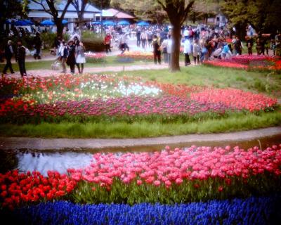 チューリップ畑1・国営昭和記念公園:Entry