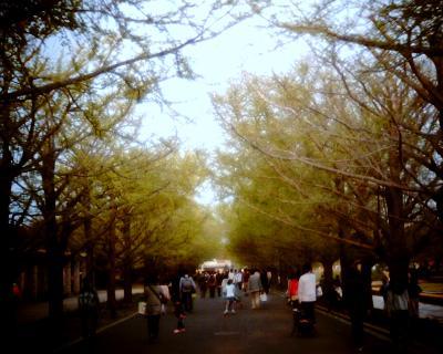 イチョウ並木・国営昭和記念公園:Entry