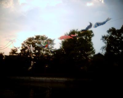 鯉のぼり:Entry