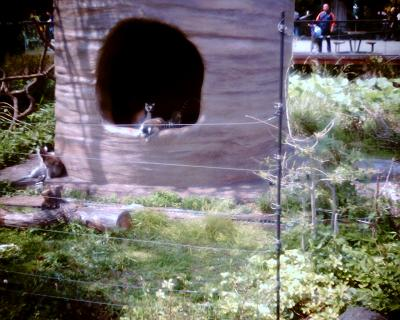 ワオキツネザル・上野動物園:Entry