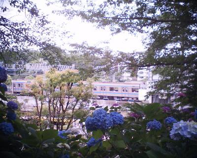 三田線車両とアジサイ・多摩川台公園:R2