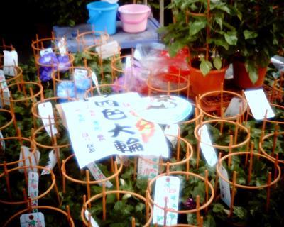 入谷朝顔市2003:Entry