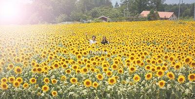 top_summer.jpg