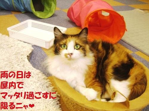 20141109_01_猫