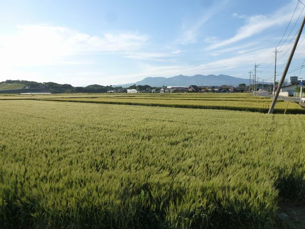 赤城山と麦畑