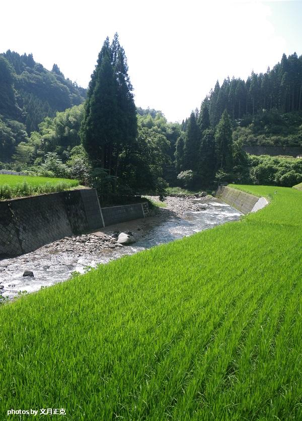 梅野川-風景-縦-3