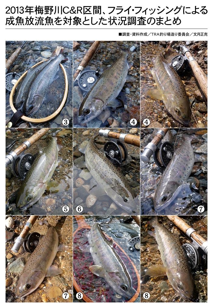 2013年/梅野川C&R区間/遊漁調査/釣果一覧