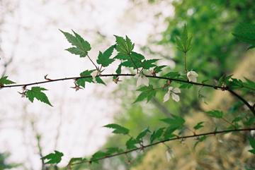 haruna-003.jpg