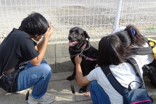 DSC00802 - 参加犬