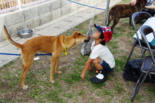 DSC00870 - 参加犬