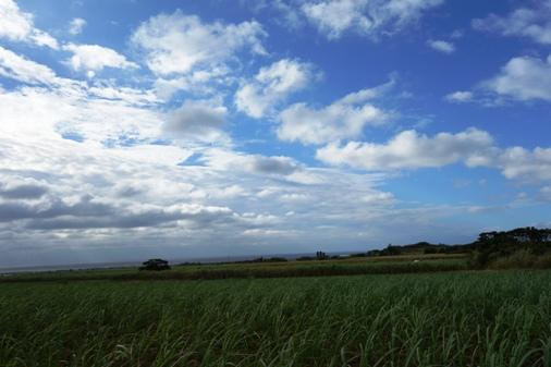 DSC03364 - きび畑