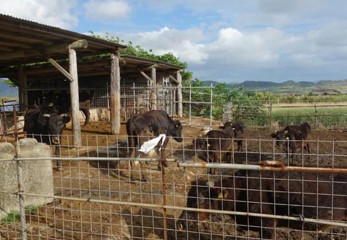 DSC03368 - 石垣牛