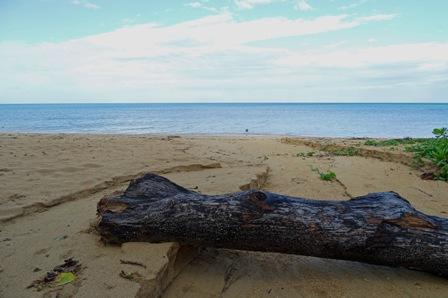 浜の雨跡-DSC02200